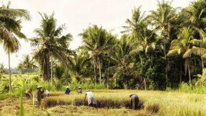 Groepsreis naar Bali