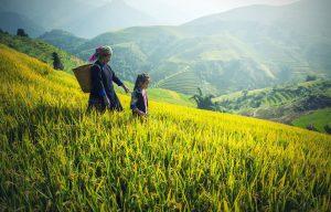 Groepsreizen naar Vietnam
