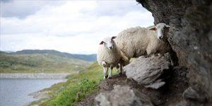kras-groepsreis-noorwegen